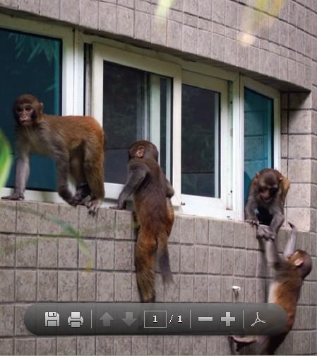 """森林公园猴子""""偷窥女厕所"""""""