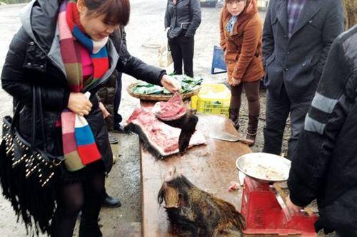 印江/14公斤重的野猪头卖100元