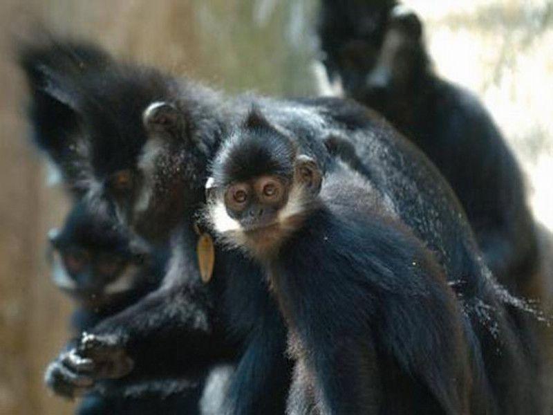 保护区内生存有国家一级保护动物黑叶猴及二级保护