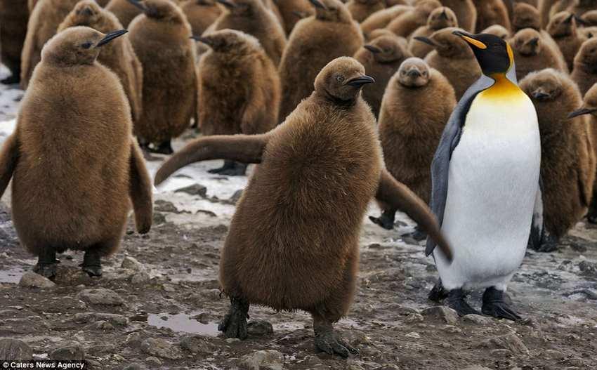 تصاویر پنگوئن ها