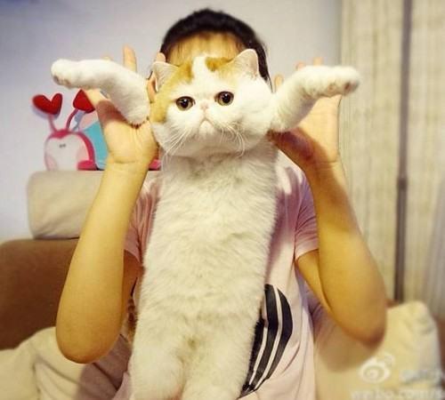 真实版加菲猫无辜表情狂卖萌【6】 (500x450)