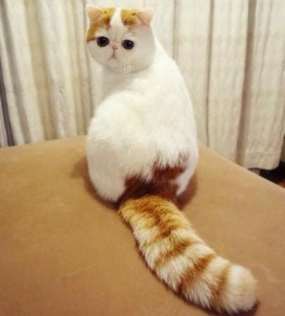 当加菲猫遭遇韩国棕
