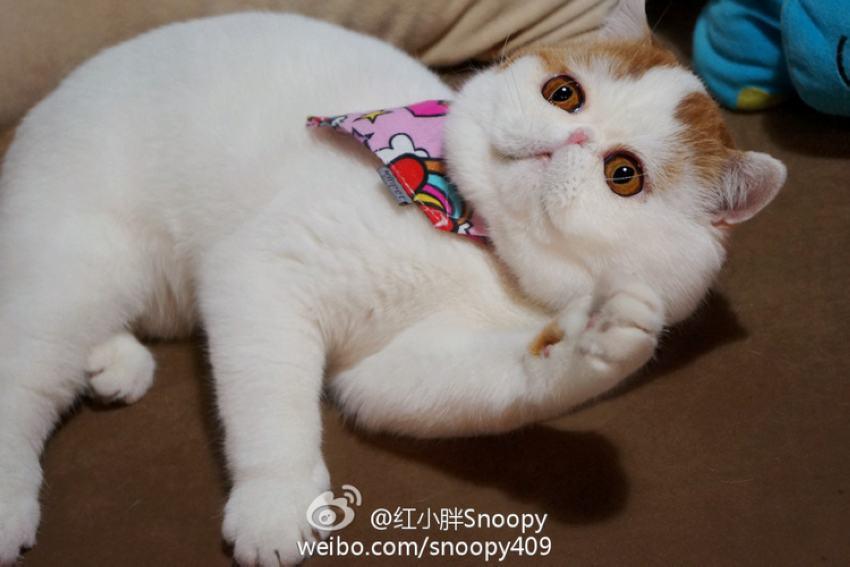 加菲猫最坏的表情图分享展示