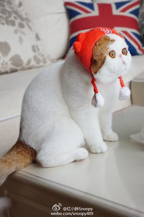 真实版加菲猫无辜表情狂卖萌【32】图片