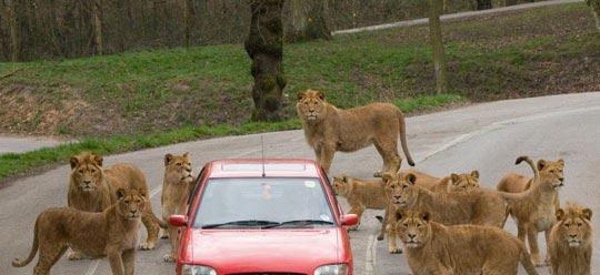 盘点全球动物袭击人类的恐怖