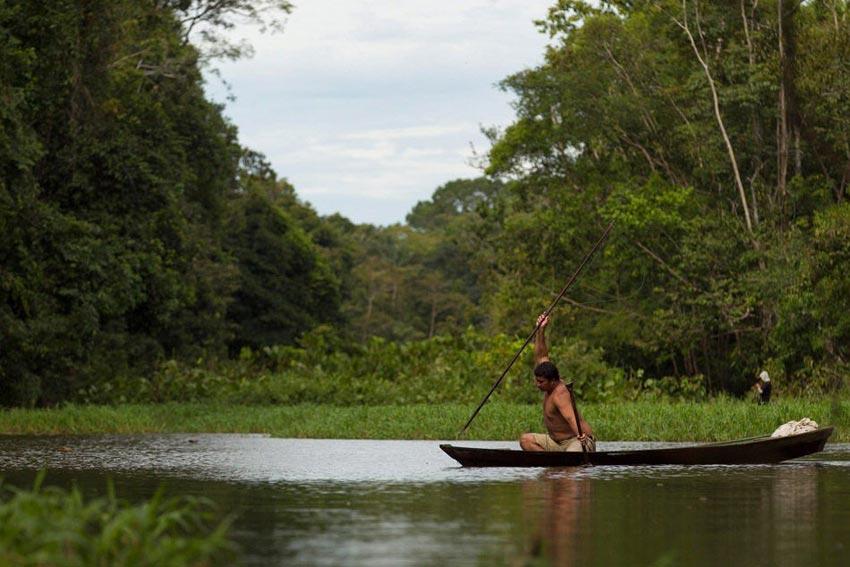 巴西环境保护部门只允许渔民每年进行一次捕杀,捕杀的巨滑舌鱼的身长
