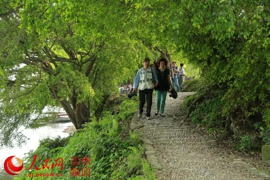 在榕江苗山侗水国家级风景名胜区的古榕群