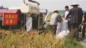 安顺市首次引进水稻水穴直播技术