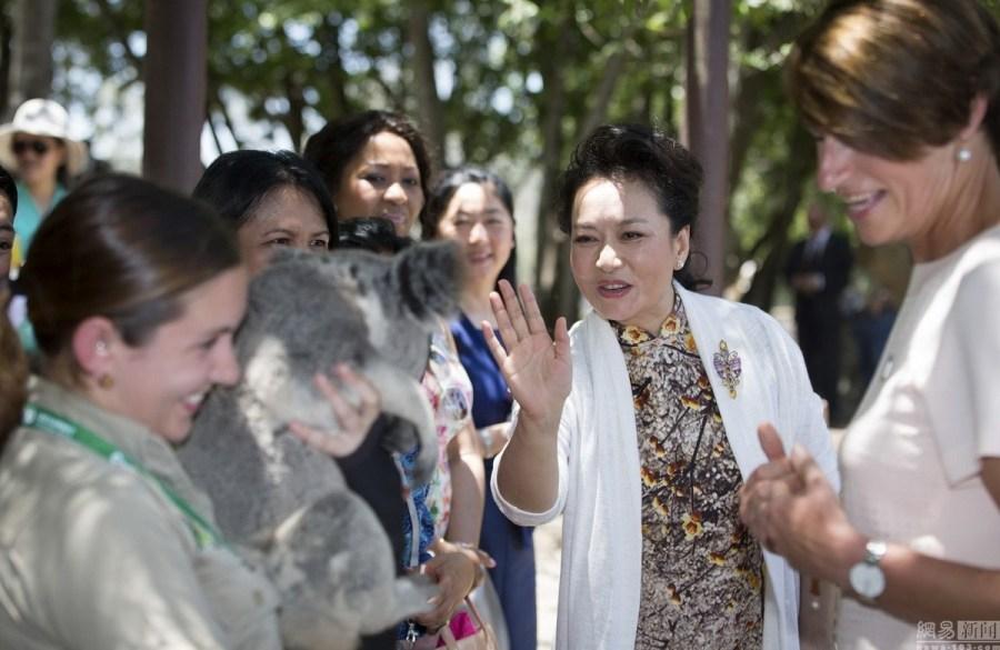 丽媛参观澳大利亚考拉保护区 身穿修身旗袍抱