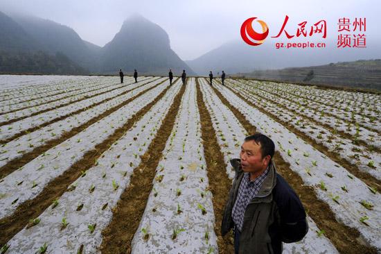 建起了400亩的蔬菜基地