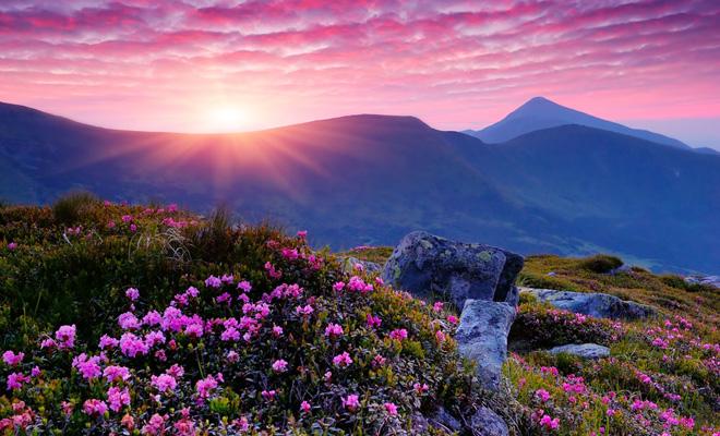 贵州赏花到哪儿--最美百里杜鹃风景区(组图)