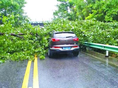 沪昆高速路边树木倒塌压住越野车