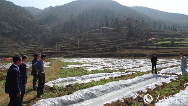 花戛乡做好农业产业结构调整后续工作