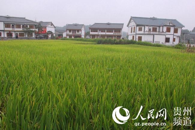 图为花茂村的美丽田园。王钦摄