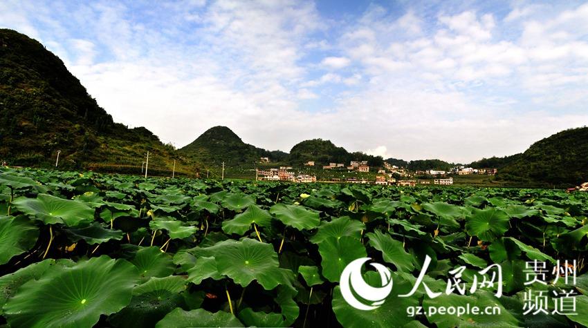2016贵州十佳美丽乡村评选展示-安顺市普定县陇财村(037)