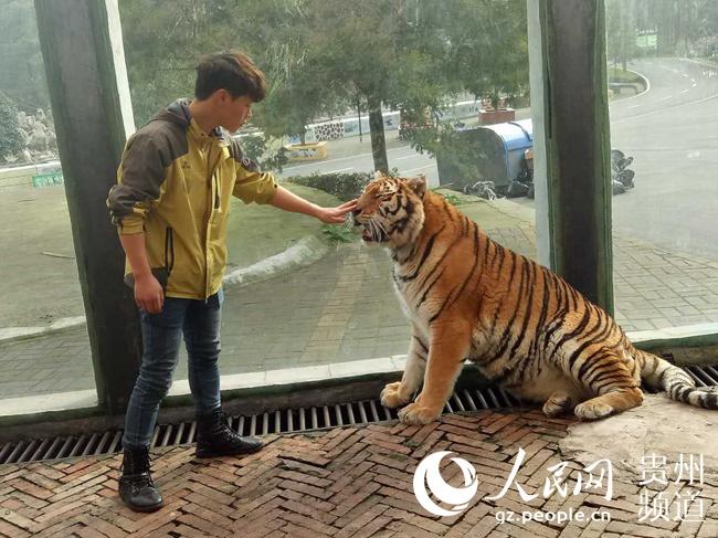 """贵州森林野生动物园回应""""虐虎""""视频:为饲养员与幼虎嬉戏场景"""