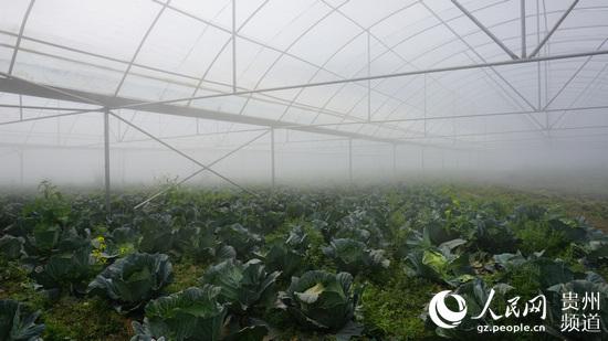 塘约村蔬菜种植基地.李宇摄
