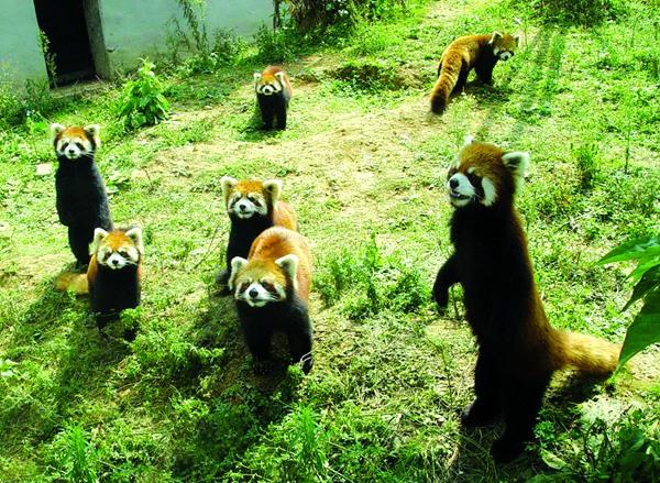 天然氧吧——贵阳森林野生动物园