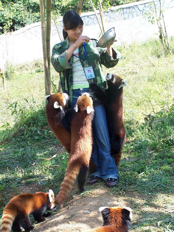 野生动物园占地约5000亩,园内有大象,小熊猫,华南虎,金丝猴,长颈鹿