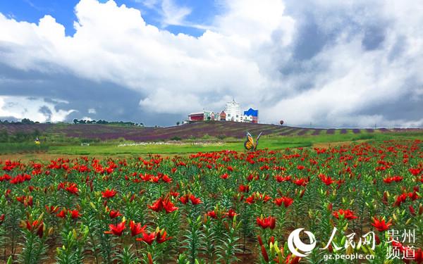 """月月旅游""""10月活动新闻发布会上获悉,由威宁县倾力打造的""""花海毕节?"""