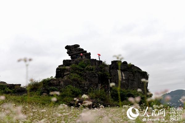 10月11日,贵州省沿河县旅发委传出喜讯,该县有一个景观奇特的地质公园沿河猫山地质公园(公园是贵州省国土资源厅批复的新增地质公园,规划面积35.72平方公里)正在紧锣密鼓地建设中,园区内大自然的鬼斧神工美景值得你去欣赏和探秘。 据了解,很久以前,乌江航道上的猫滩,水流湍急,十分险恶,常有覆舟之虞,每当木船撞滩,船沉人溺,呼救哀号,惨不忍睹。这些情状,感动了玉皇大帝,便派山头上的石猫承担了报警任务:当船行至滩前时,如石猫发出咪悠眯悠回荡山谷的叫声,船工听到,只好停船等待了,如果贸然行驶,必然撞滩翻船;