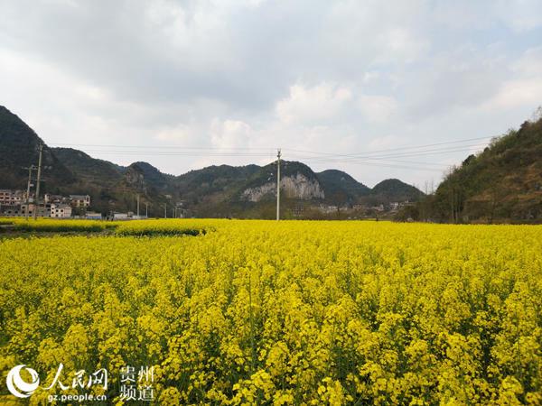 正在进行农业产业调整,准备进行农文旅一体化发展的观游村