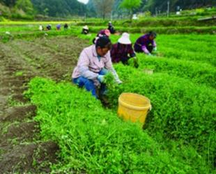 """""""三变""""改革助力农产结构调整白云区牛场乡全力推进农业产业种植结构调整,以农村……"""