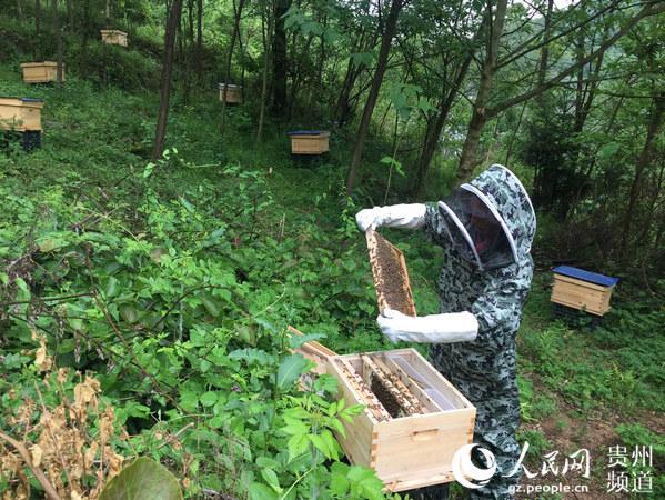 """铺开一张""""甜蜜""""事业蓝图每日清晨,瓮安县平定营镇营定街村的上空犹如狂风般作响,成千上万的蜜蜂……"""