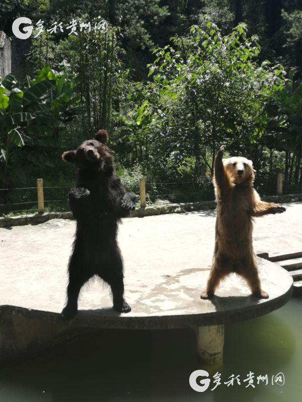 可爱又呆萌的熊二照片