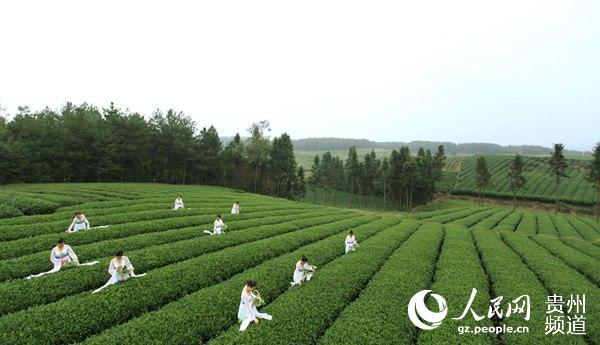 """古城遵义:""""中国茶业第一市""""正逐渐崛起"""