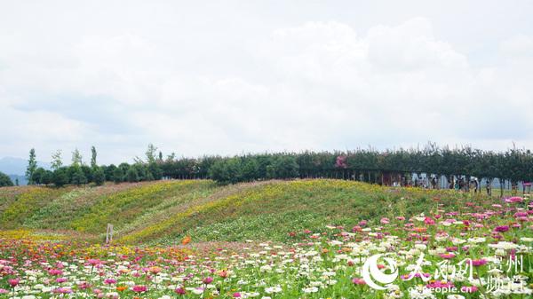 盛夏,杉坪景区鲜花盛开,风景如画。(李宇 摄)