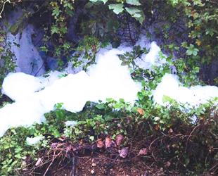 青岩河漂满白色泡沫 环保部门已立案调查