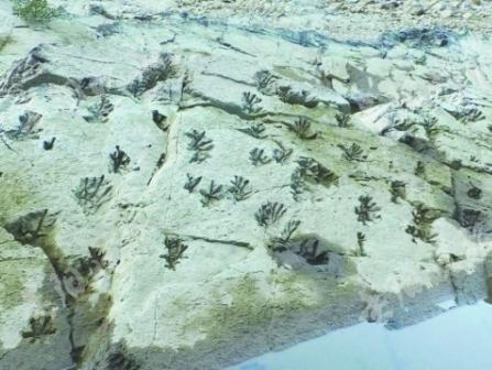"""山村河床 现神秘印记在三都县都江镇打鱼社区,一个地名叫""""老虎跳""""的地方,当河水褪去后,裸……"""