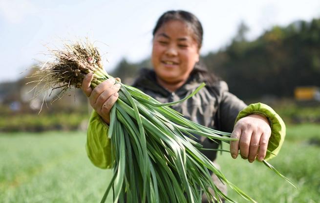 松桃世昌:调整产业结构助农增收