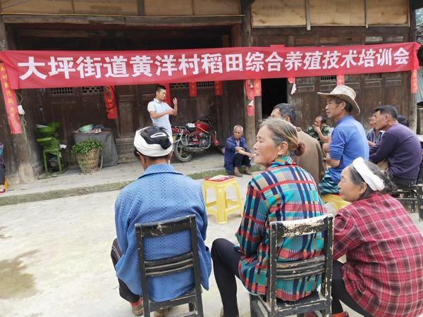务川黄洋村稻田养鱼发展生态经济
