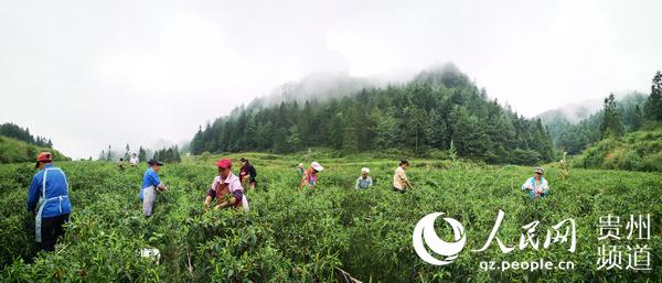 贵州务川:钱包鼓起来农民笑开怀