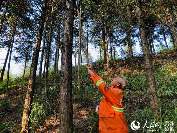 姜时保在护林。朱梦怡 摄