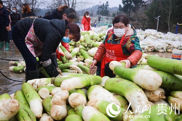 2月10日,贵州省毕节市黔西县绿化乡丰收村群众在集中清洗水果萝卜。 周训超 摄