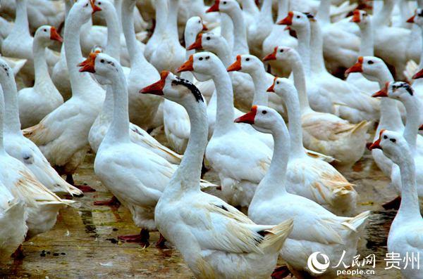 http://www.k2summit.cn/tiyujingsai/2538192.html