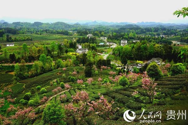 贵州湄潭县坚持生态优先,努力实现产业兴、村庄美、百姓富。 瞿欣含摄