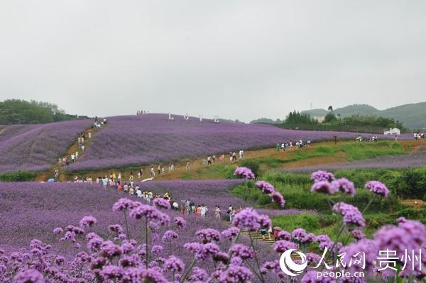 贵州桐梓县杉坪景区迎来游客。桐梓县摄影协会供图