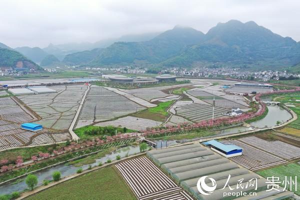 贵州汇川区深入推进农村产业革命,打造泗渡坝区布局特色产业。汇川区融媒体中心供图
