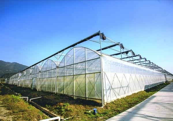 榕江县车江坝区蔬菜基地一角。