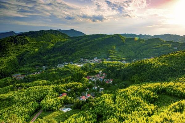 盘州大洞竹海。贵州省林业局提供