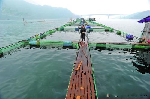 罗甸县水产养殖业迈入快车道